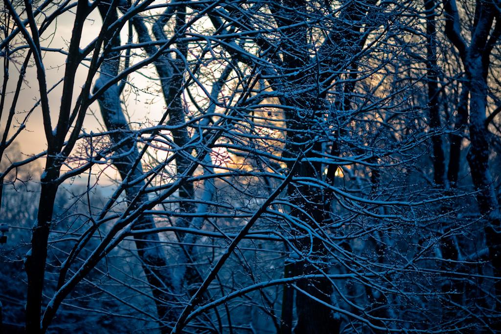 Snowy Sunrise Over Wyncote